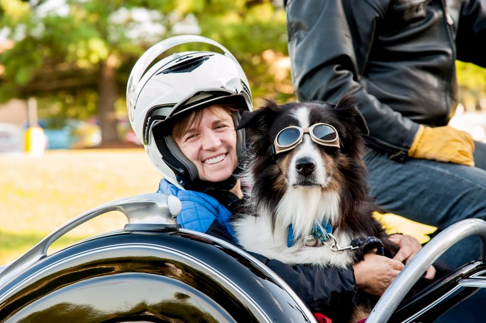 Australian Shepherd dog and owner riding in sidecar of motorcycle