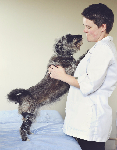 Veterinarian fitting dog knee brace