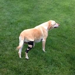Hero Dog Chloe