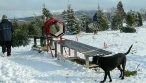 Hero_Case_Kuli Christmas tree farm
