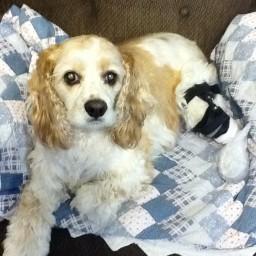 Benson Dog