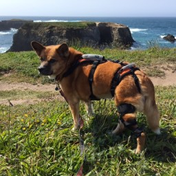 Bodhi With Dog Knee Brace